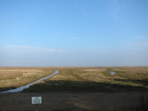 Marsh near Donna Nook
