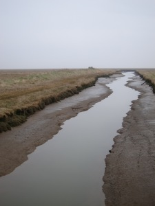 Marsh between Donna Nook and Cleethorpes